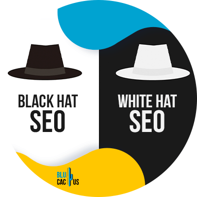 Blucactus - black hat seo and white hat seo