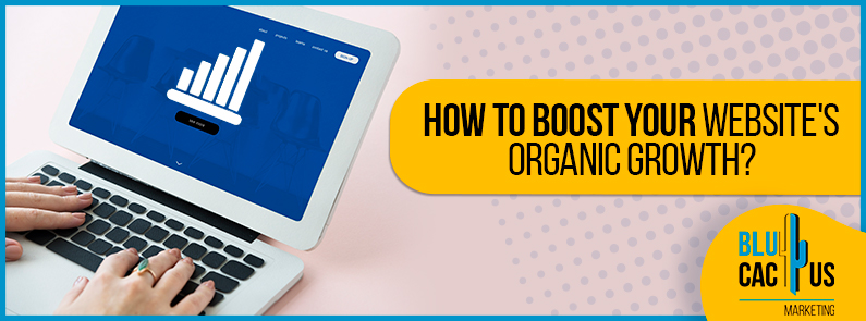 BluCactus - How to boost the organic growth of your website?